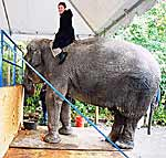 Татьяна Лебедева верхом на слоне